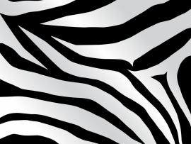 Zebra Slide Backgrounds