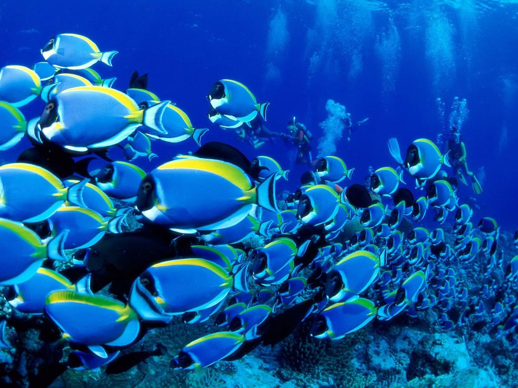 best underwater hd 1024x768 resolution backgrounds - 1024x768 large