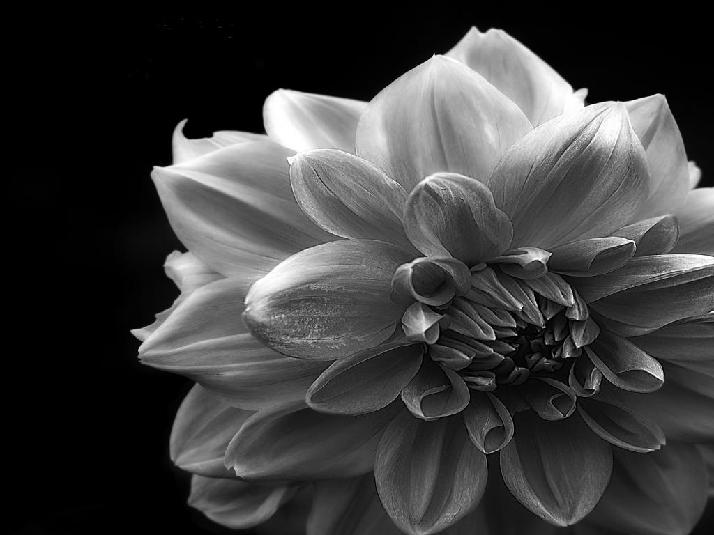 Black and White Flower Graphic PPT Backgrounds