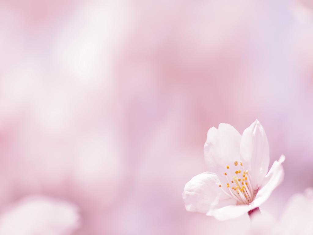 Flower On A White and Images s   Template PPT Backgrounds