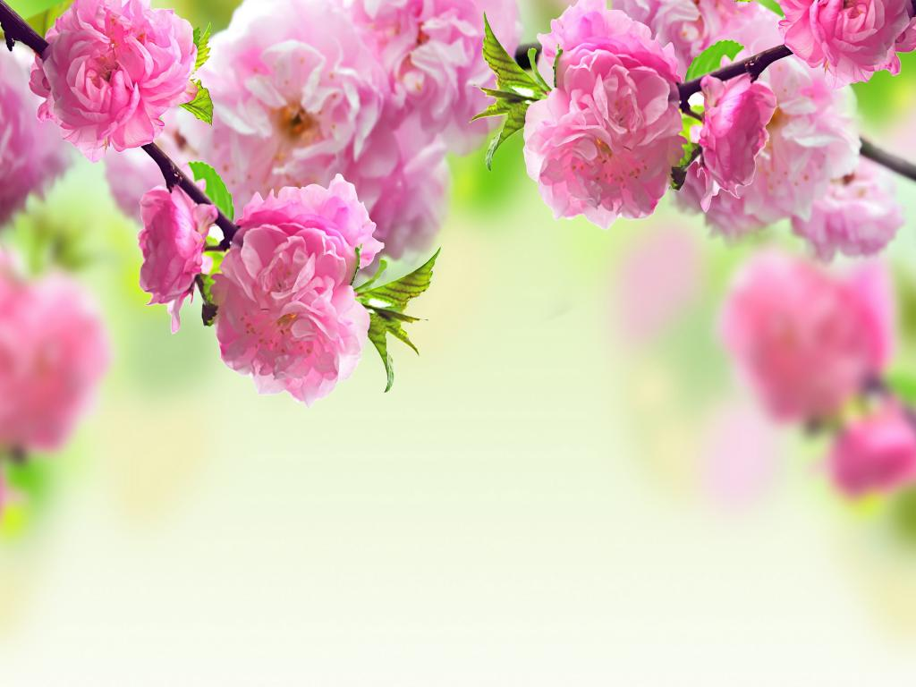 Spring Flowers Pictures Photos Images Design PPT Backgrounds