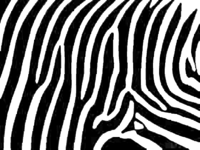 Amper bae zebra print wallpaper backgrounds for powerpoint templates amper bae zebra print wallpaper backgrounds toneelgroepblik Images