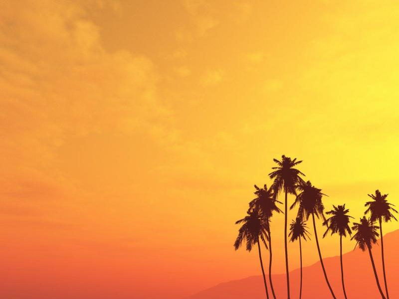 Angry Sun Palm Tree Quality Backgrounds