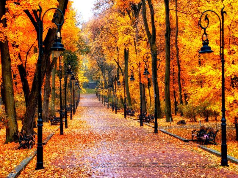 Autumn Design Backgrounds