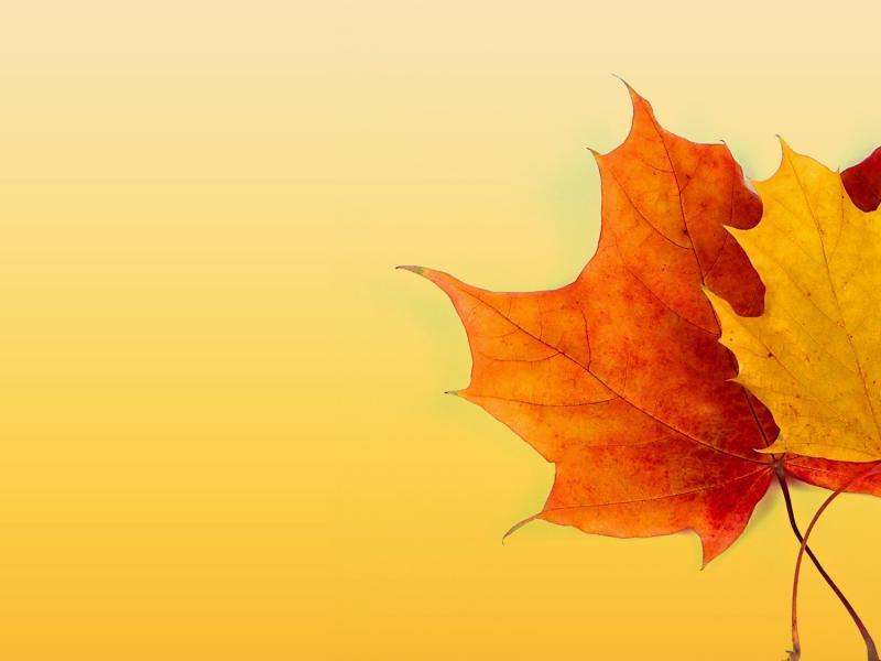Autumn Frame Backgrounds