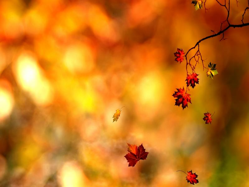 Autumn Leaves Design Backgrounds