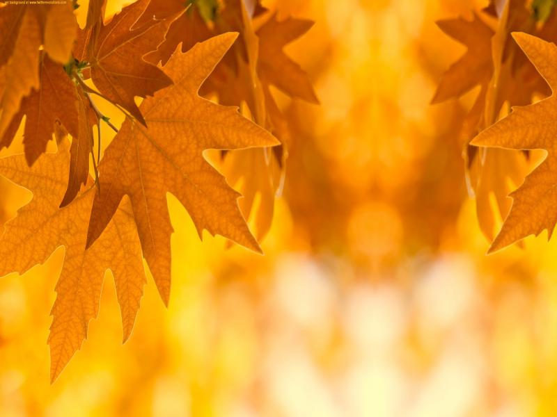 Autumn Leaves Picture Backgrounds