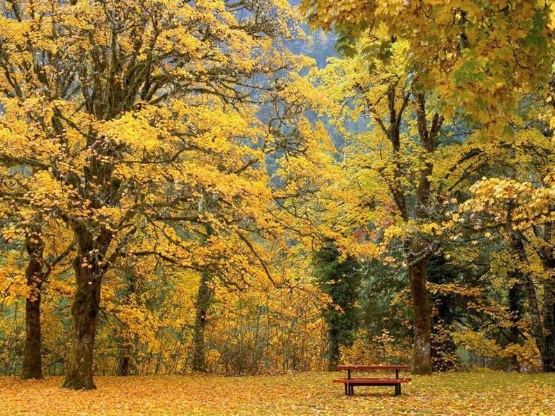 Autumn Scenerys BeautifulAutumn Scenery Desktops   Picture Backgrounds