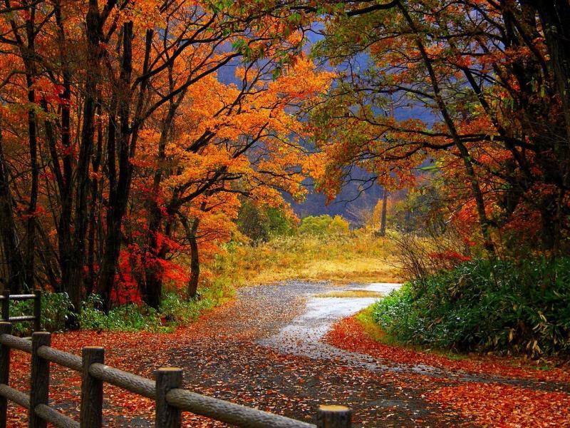 Autumns Bests Art Backgrounds