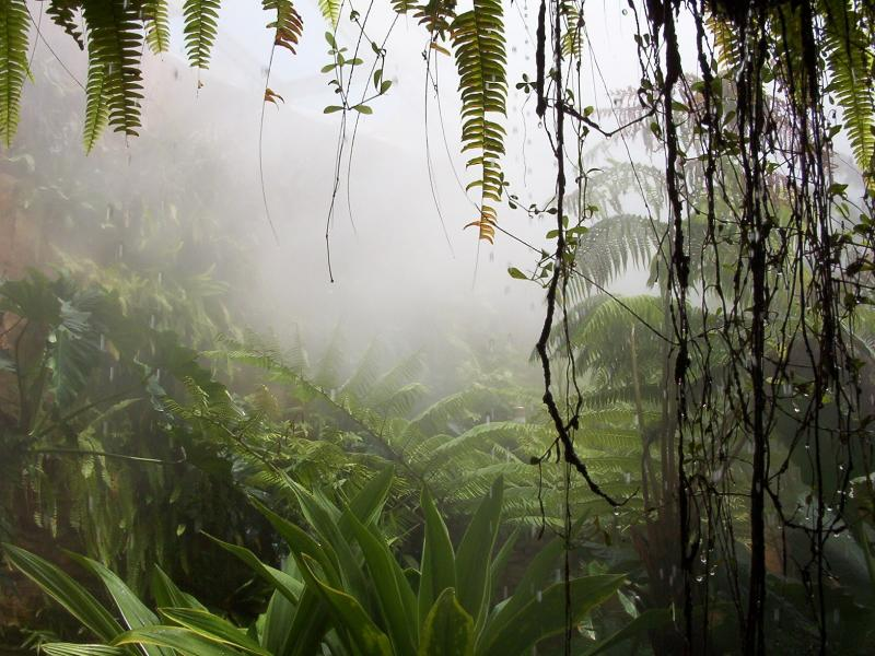 Background Jungle ~ Kindle Pics Graphic Backgrounds
