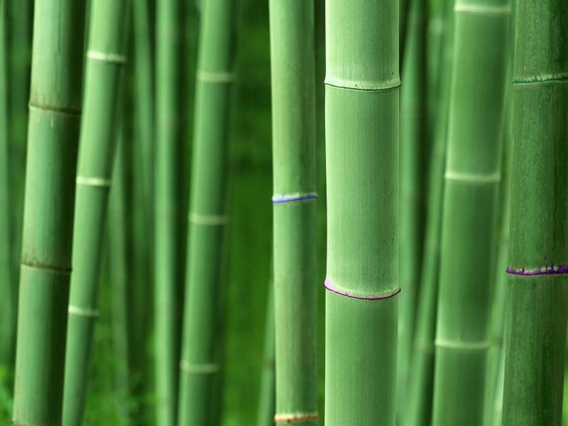 Bamboo Art Backgrounds