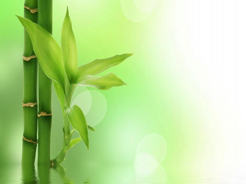 bamboo art backgrounds for powerpoint templates