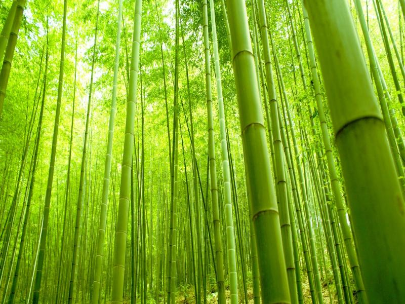 Bamboo Forest image Backgrounds