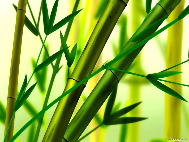 Bamboo image Backgrounds