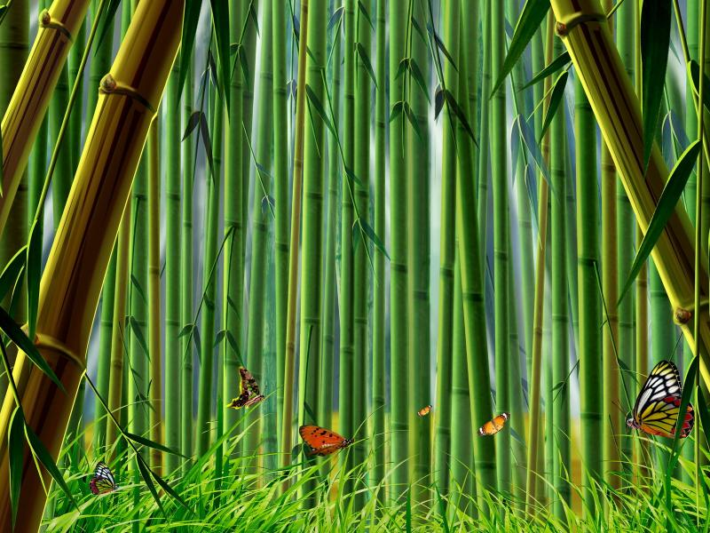bamboo presentation backgrounds for powerpoint templates ppt
