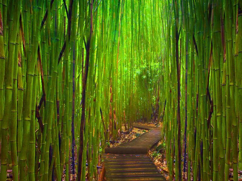 Bamboo Tree Photo Backgrounds