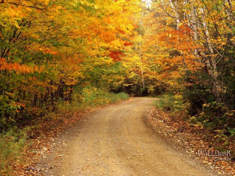 Beautiful Autumn Seasons HD  Nices Backgrounds