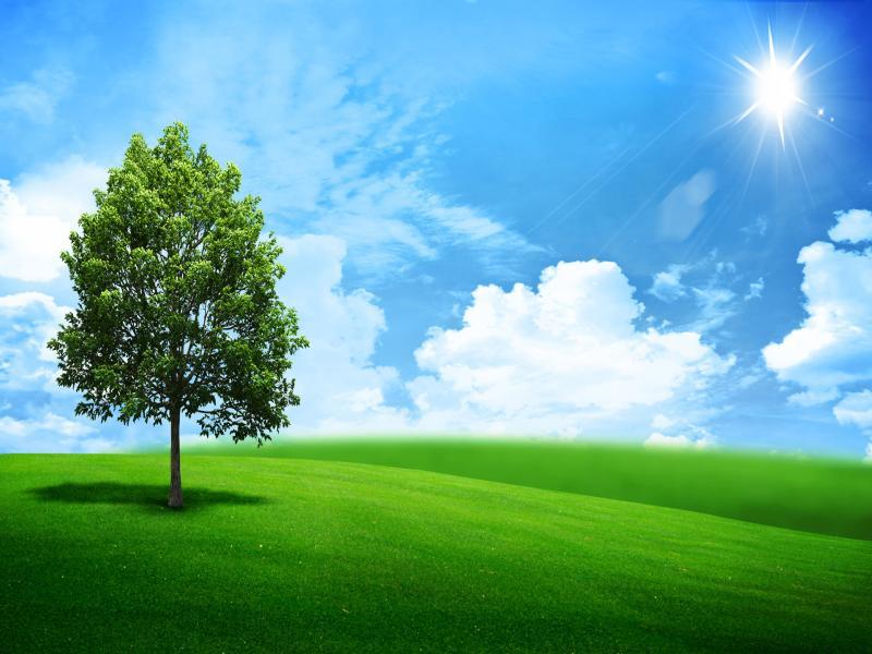 Beautiful Green Landscape Wallpaper Backgrounds