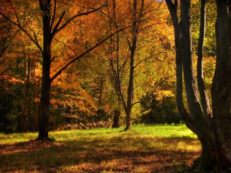 Beautiful Nature Desktop Zellox Frame PPT Backgrounds