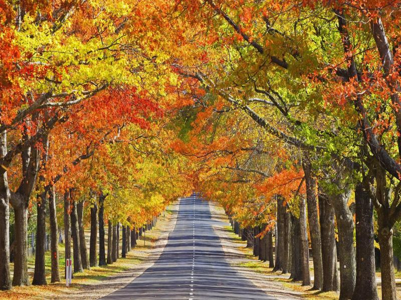 Beautiful Roads  Bests Template Backgrounds