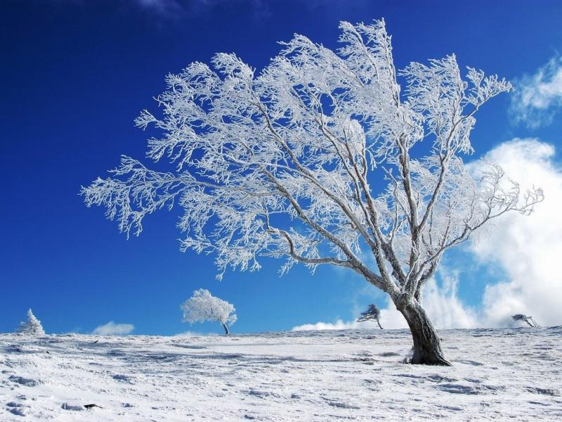 Beautiful Winter Snow Tree Hd s13   Wallpaper Backgrounds