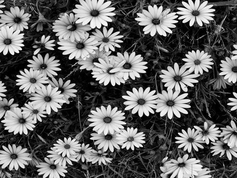 Black and White Flower Art Backgrounds