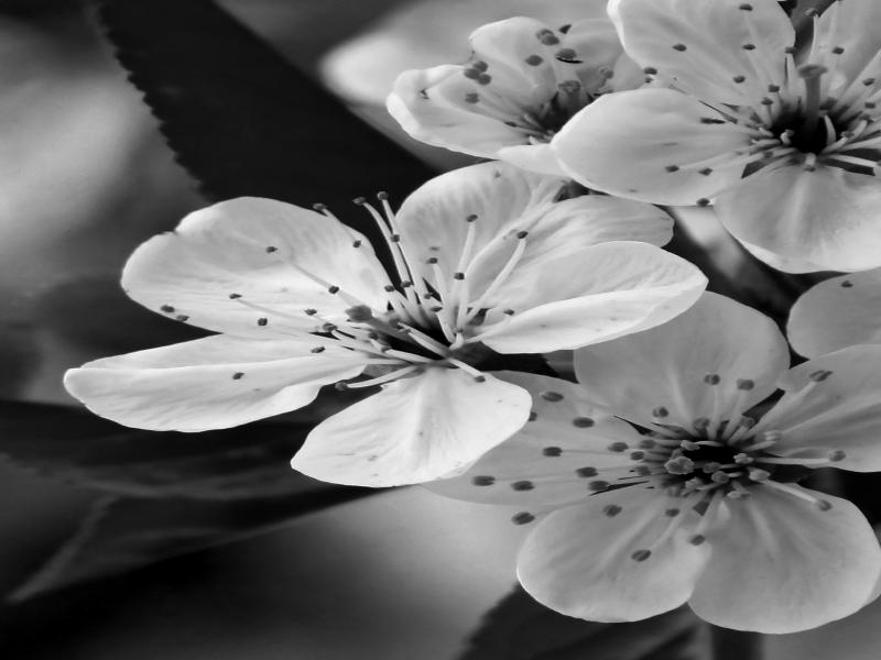 Black and White Flower Design Backgrounds