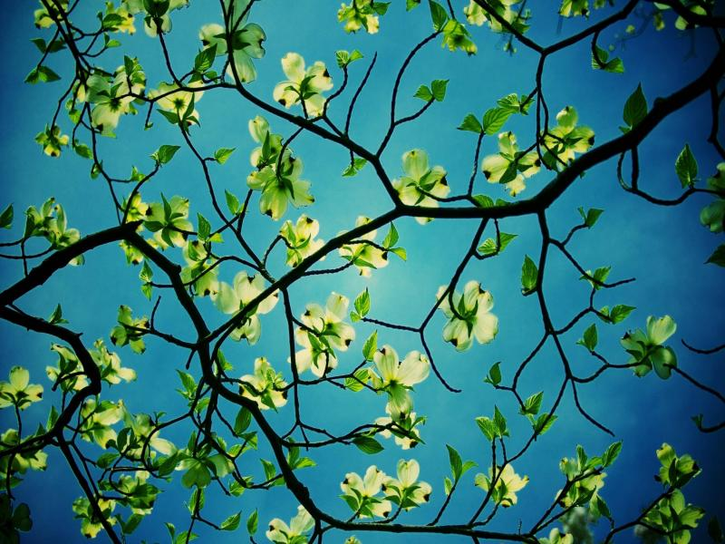 Blue Desktop Trees Design Backgrounds