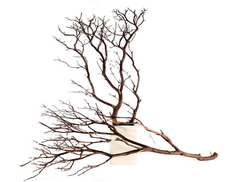 Branches image Backgrounds