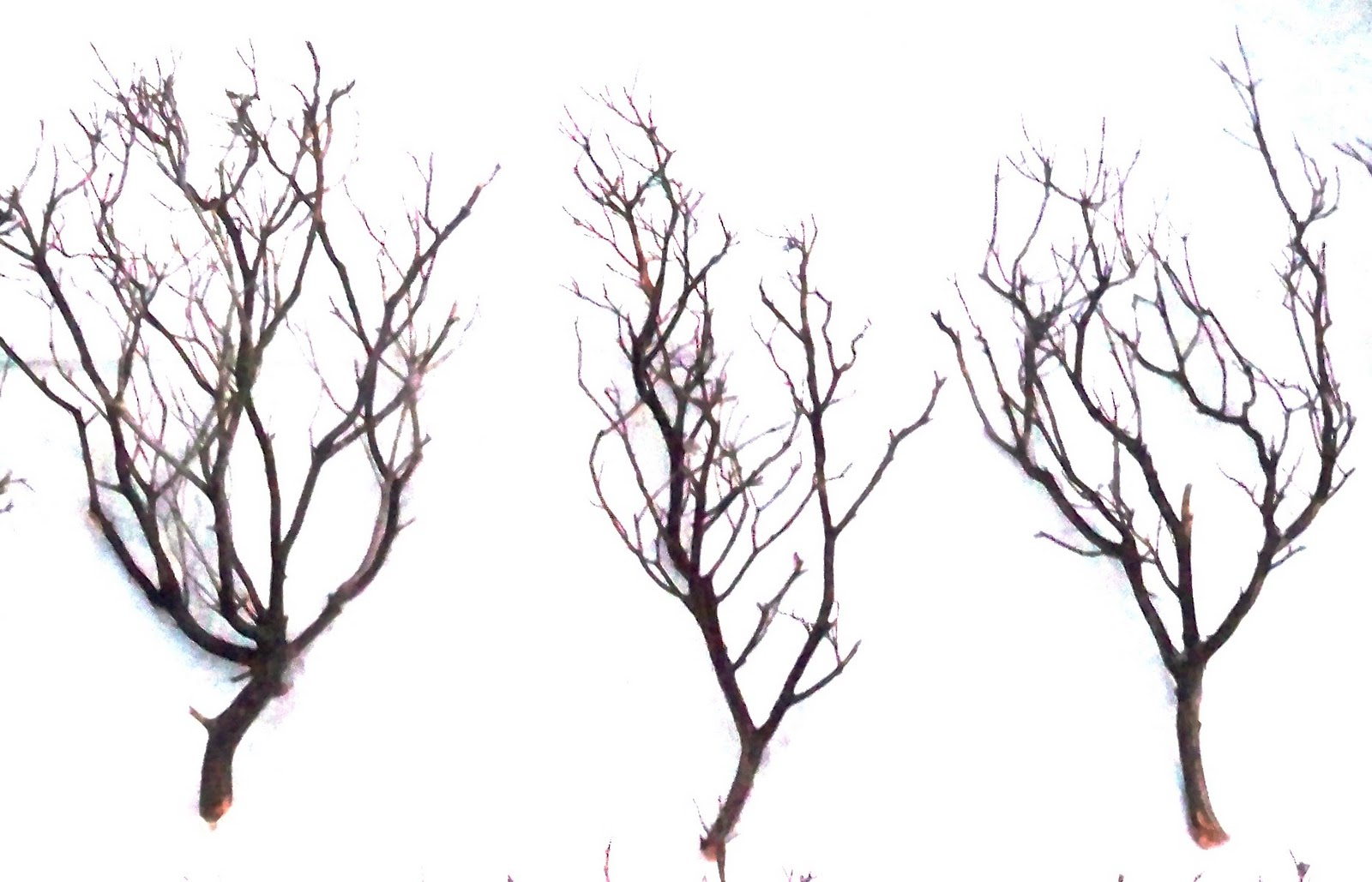 Branches Photo Backgrounds