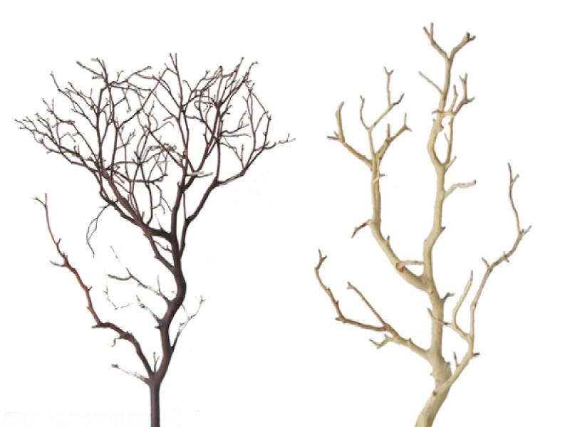 Branches Template Backgrounds