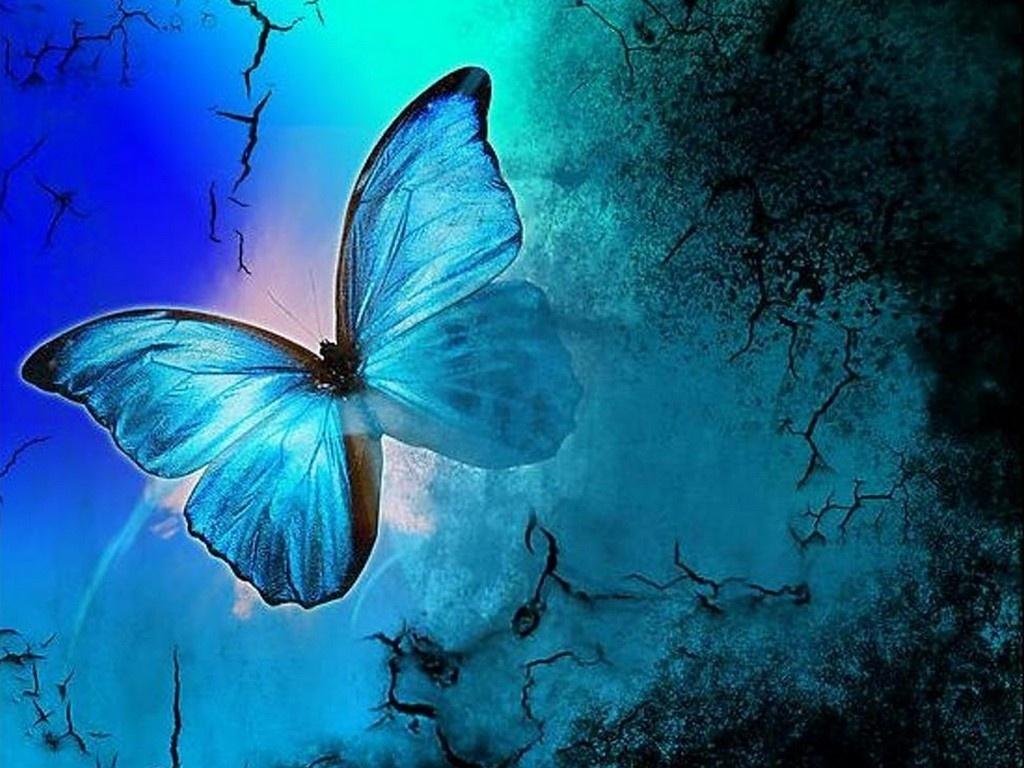 Butterflies Blue HD Backgrounds