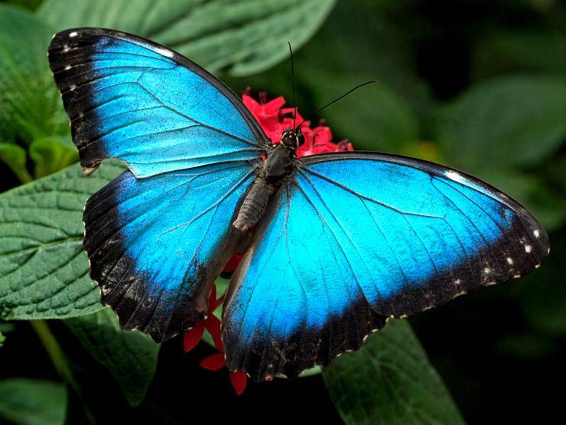 Butterfly Desktops Butterflies Backgrounds