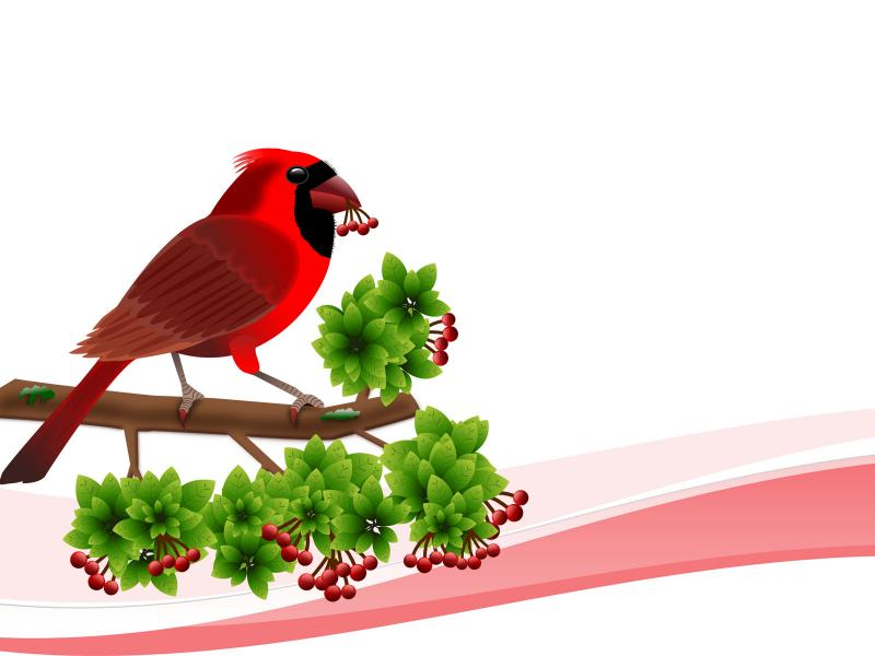 Cardinal Birds Backgrounds