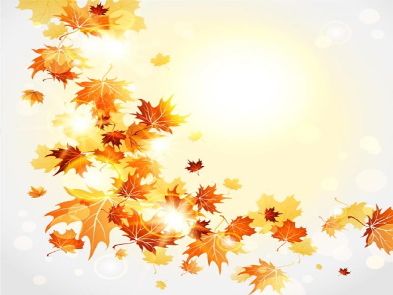 cartoon fall leaves bright autumn leaves vector download