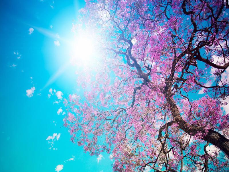 Cherry Blossom Frame Backgrounds