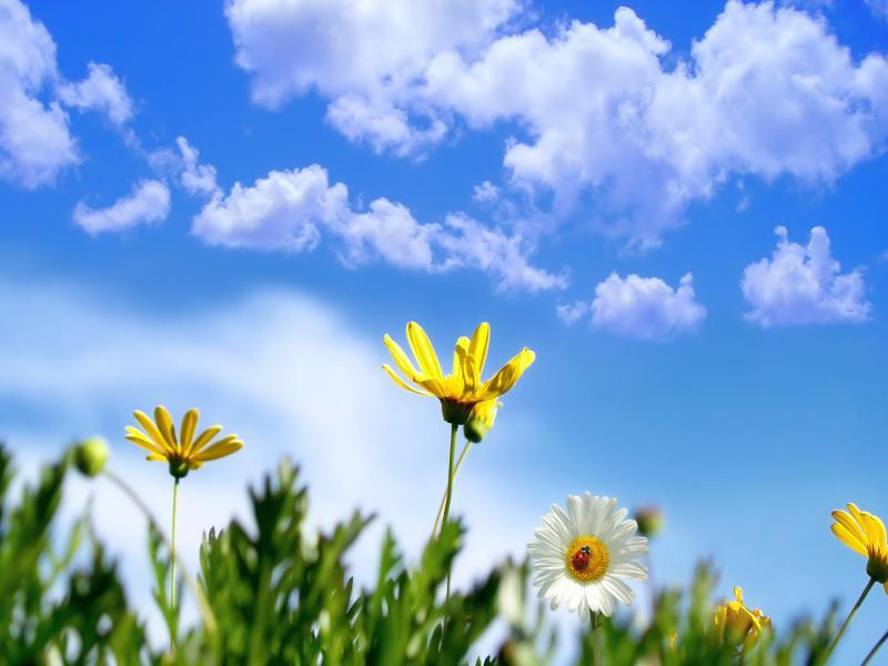 Clouds Sky Flowers Spring Slides Backgrounds