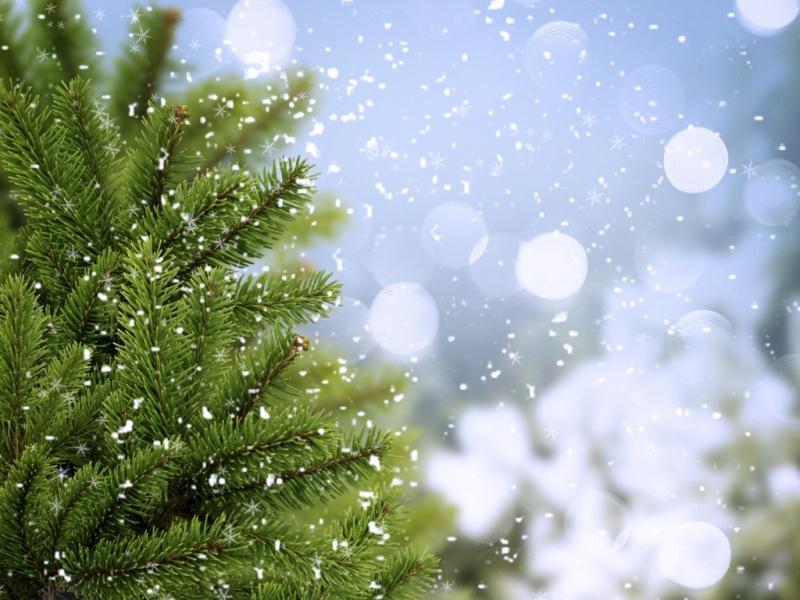 Comments For Abstract Winter Tree Bubbles and Snowflakes Template Backgrounds