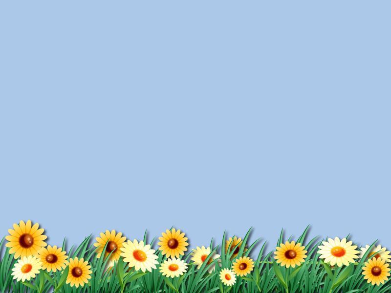 Daisy Flower Unique Wallpaper Backgrounds