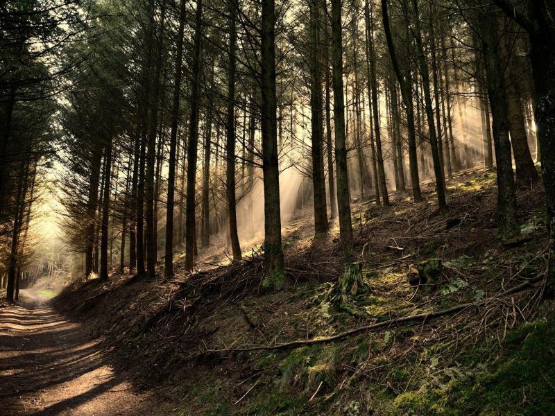 Dark Woods Graphic Backgrounds
