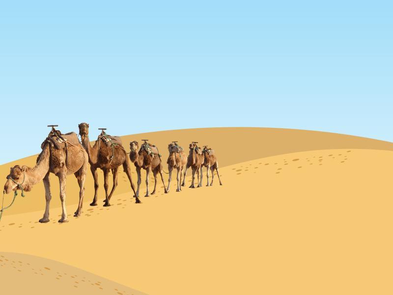 Desert Camels Backgrounds