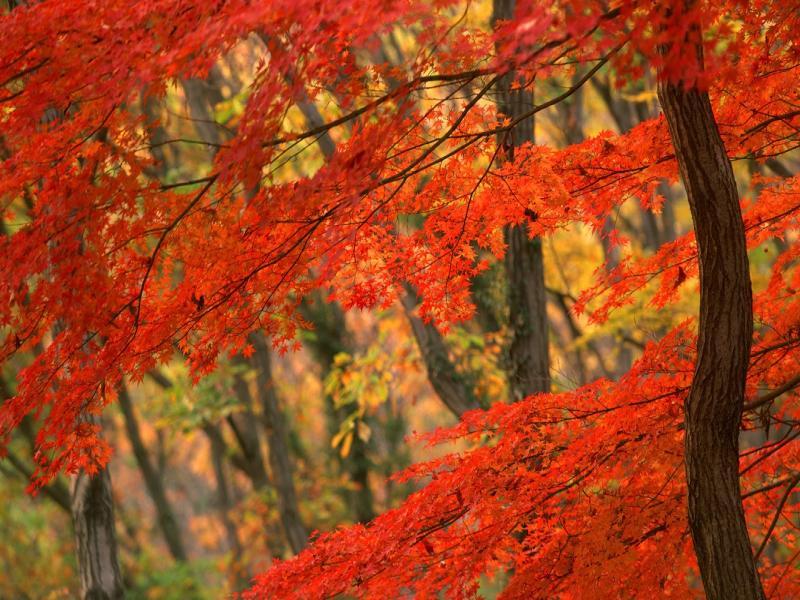 Desktop Autumn Leaves Design Backgrounds