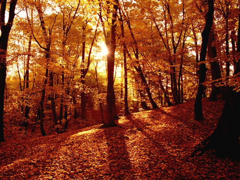 Earth  Autumn Fall Art Backgrounds