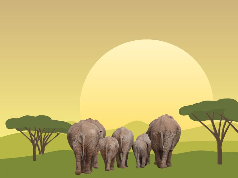 Elephant Migrations Backgrounds For Powerpoint Templates Ppt