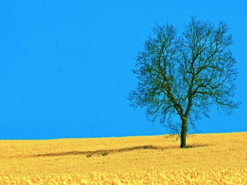 Field and Tree For PowerPoint Nature PPT  1280x800  Jpeg Template Backgrounds