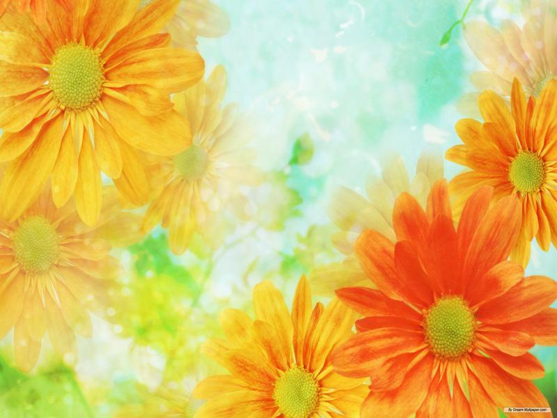 Flower  HDs Slides Backgrounds