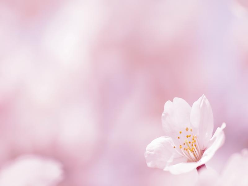 Flower On A White and Images s   Template Backgrounds