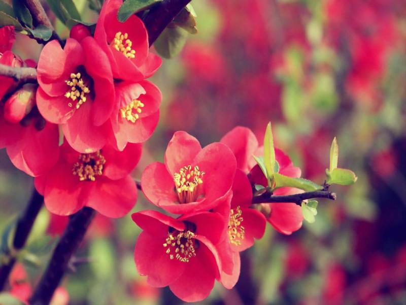 Flower Walpaper  Latest Hds Photo Backgrounds