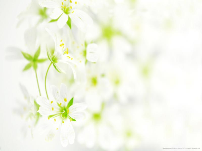 Flowers 2560x1600 Flowers Frame Backgrounds