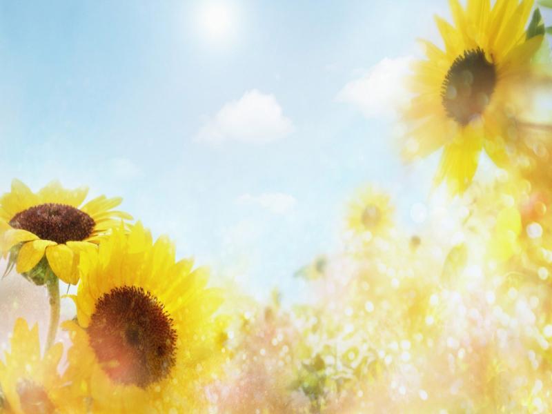 Flowers For Flower Lovers  Flowers Desktops  Frame Backgrounds